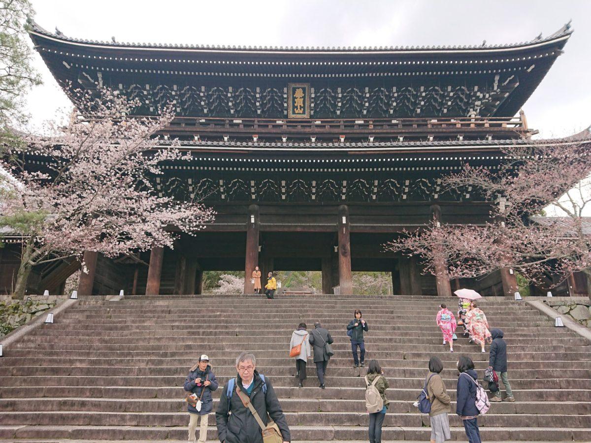 京都 お花見
